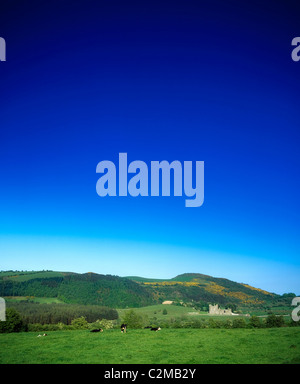 Holstein-Friesian Cattle, Fore Abbey, Co Westmeath, Ireland - Stock Photo