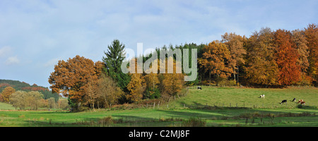 Farmland with cows in field and forest in autumn colours in the Ardennes, Belgium - Stock Photo