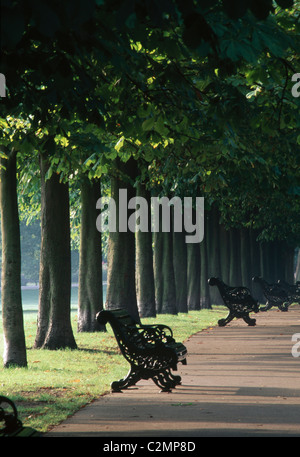 Tree Lined Avenue, Greenwich Park, London. Landscaped by Andre Le Notre for Charles II. Late 17th century - Stock Photo