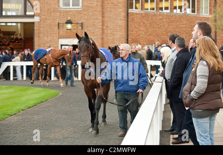 The Parade Ring Horse Sales