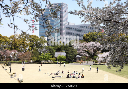 Cherry blossoms in the Imperial Palace East Garden Tokyo Japan - Stock Photo
