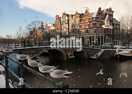 Seagulls along in the wintertime, Amsterdam, the Netherlands - Stock Photo