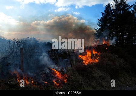 Moorland Fire on Slieve Gullion, County Armagh, Northern Ireland - Stock Photo