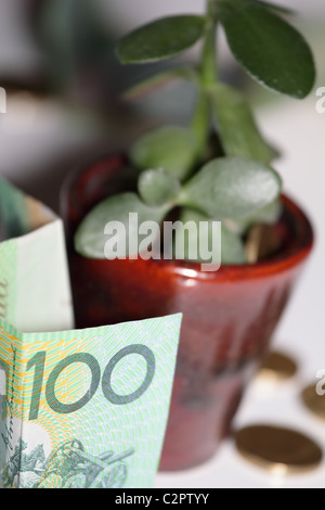 Australian one Hundred Dollar Bills with Money Tree and Gold Coins - Stock Photo