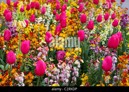 Spring Flower Display With Wall Flowers Pansies And Forget Me Nots Stock Photo Royalty Free