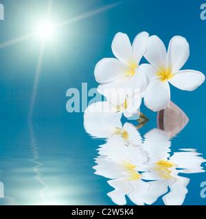 Tropical flower Plumeria alba and seashell in the sea - Stock Photo