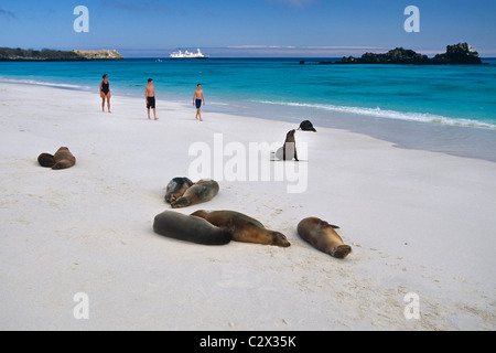 Family walking on beach near sea lions Espanola Island Galapagos Ecuador - Stock Photo