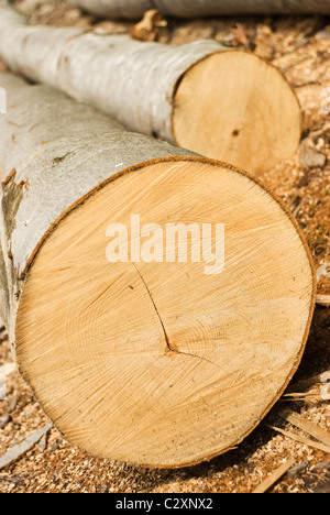 Close up of cut wooden tree with sawdust around - Stock Photo