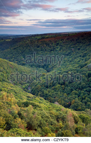 View over the Dart Valley Nature Reserve (River Dart), Dartmoor National Park, Devon, England, UK - Stock Photo