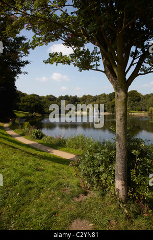 Wood land scene with lake. Bright sunny day, blue sky. White clouds. Portrait image - Stock Photo
