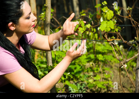 Woman in profile looking and checking new vine leaf - Stock Photo
