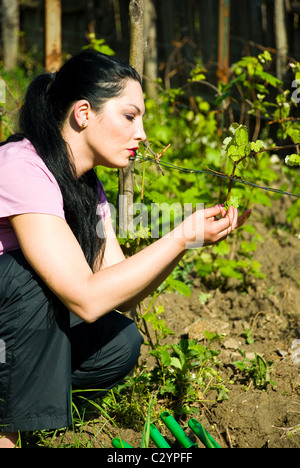 Serious woman checking the first vine leaves for disease in her garden at countryside - Stock Photo