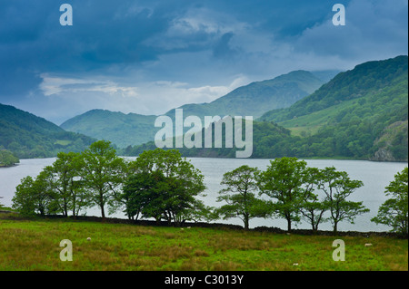 Hawthorn trees in Welsh landscape in Snowdonia National Park at Lake Llyn Gwynant, Gwynedd, Wales - Stock Photo