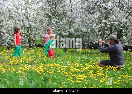 children playing among blossoming fruit trees, Haspengouw Belgium - Stock Photo