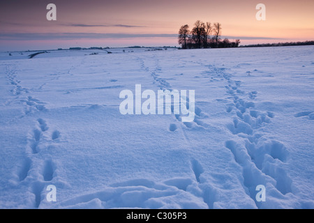 Animal tracks across the field in traditional snow scene in The Cotswolds, Swinbrook, Oxfordshire, United Kingdom - Stock Photo