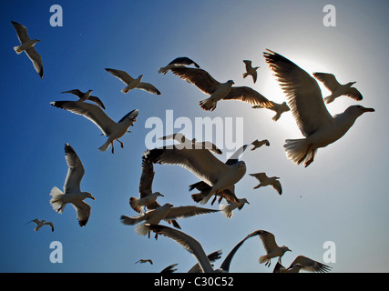 Flock of seagulls in flight - Stock Photo