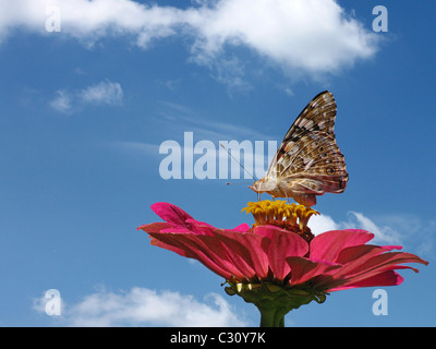 butterfly (Painted Lady) on flower  over blue sky - Stock Photo