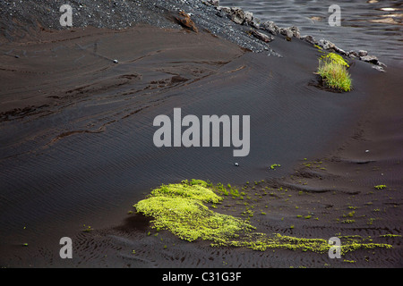 GREEN MOSS ON A BEACH OF BLACK SAND, SOUTHERN COAST OF ICELAND, EUROPE - Stock Photo
