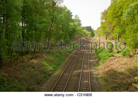 Railway track with tall trees each side. - Stock Photo