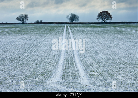Frosty scene field and trees during hoar frost in winter, The Cotswolds, UK - Stock Photo