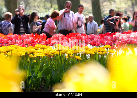 Visitors taking pictures of tulips at the Keukenhof Flower Garden Lisse. Tourist attraction drawing huge crowds - Stock Photo