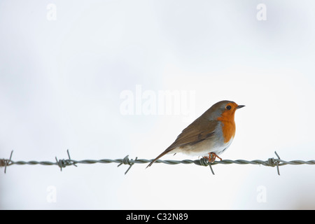 Robin on barbed wire by snowy hillside in The Cotswolds, UK - Stock Photo