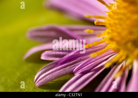 macro photo of a flower - Stock Photo