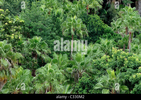 Palm Trees at Sun City holiday resort in South Africa - Stock Photo