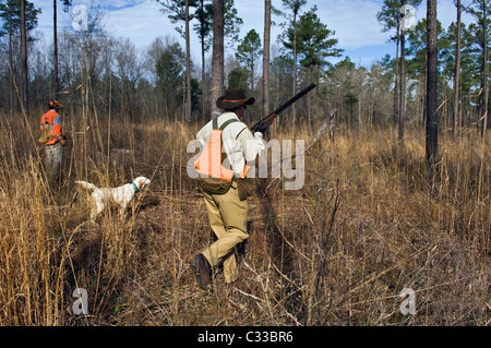 Upland Bird Hunter, Guide and English Setter on Point during a Bobwhite Quail Hunt in the Piney Woods Georgia - Stock Photo