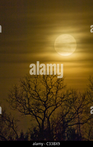 Full Moon of March 19, 2011 and Silhouetted Tree from Floyd County, Indiana - Closest Approach of the Moon in 18 - Stock Photo