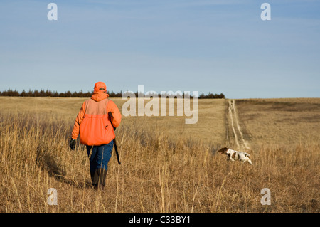 Upland Bird Hunter Walking in Field while a Brittany Spaniel Hunts in Front during a Ringneck Pheasant Hunt near - Stock Photo