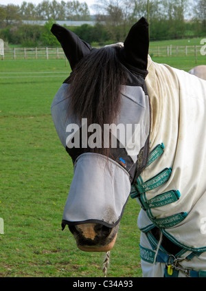 Protective eye mask worn by a horse to prevent flies from flying into their eyes - Stock Photo