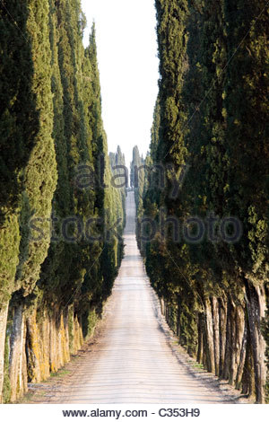 white road with cypresses,chianti,tuscany,italy - Stock Photo