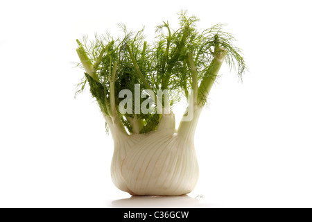 Fresh fennel bulb with green - Stock Photo