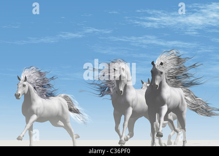 A herd of Andalusian white horses gallop together on the white sands of a desert. - Stock Photo