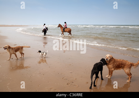 Teenage girls riding their horses with their dogs on Holkham beach, North Norfolk coast, UK - Stock Photo