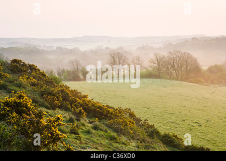 Misty dawn in early spring near Corfe Castle village, Dorset, UK - Stock Photo