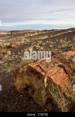 Petrified wood from extinct Araucarioxylon arizonicum Tree in the Crystal Forest, Petrified Forest National Park, - Stock Photo