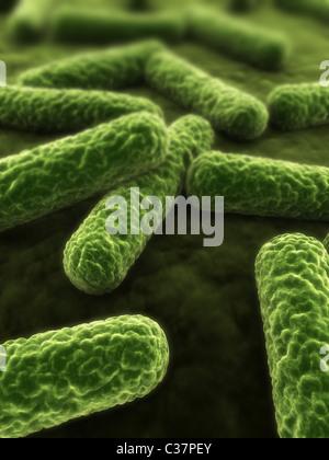 3d bacteria - Stock Photo