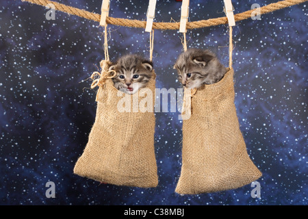 two kittens in bag - hanging at rope Stock Photo