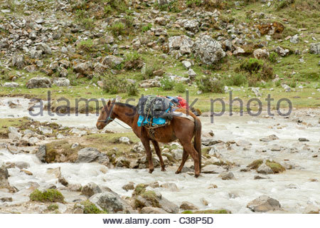 A pack-horse crosses a small river on the Salktantay Trek en route to Machu Picchu. Near Mollepata, Peru. - Stock Photo