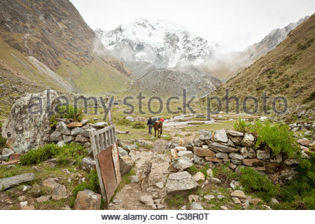 Peruvian man with pack-horse sets out on a trail from base camp at Soray to the Salkantay pass, Peru, South America - Stock Photo