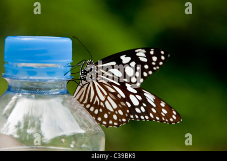 Butterfly on water bottle at the Kuang Si Waterfalls in Laos - Stock Photo