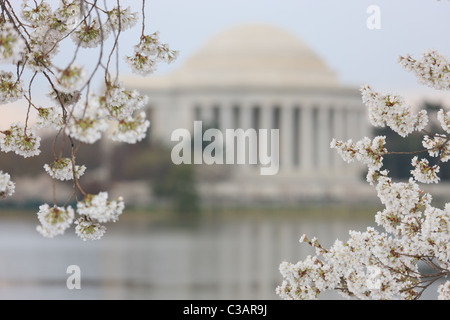 The Jefferson Memorial framed by cherry blossoms during the 2011 National Cherry Blossom Festival in Washington, - Stock Photo