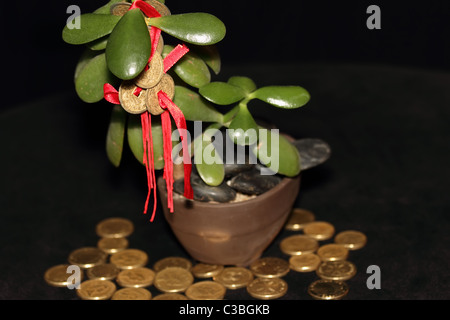 Feng Shui COins on Money Tree with Gold Coins symbolising success and wealth - Stock Photo