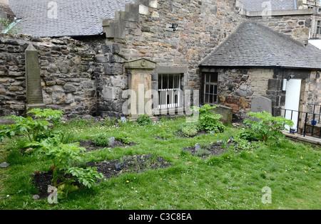 Part of the herb garden planted on graves in Greyfriars Kirkyard, Edinburgh, Scotland, UK. - Stock Photo