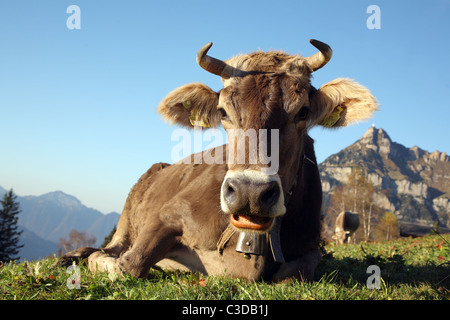 A cow on a pasture in front of the Rophaien mountain, Eggberge, Switzerland - Stock Photo