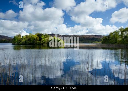 Summer reflections, Lough Gill, County Sligo, Ireland. - Stock Photo