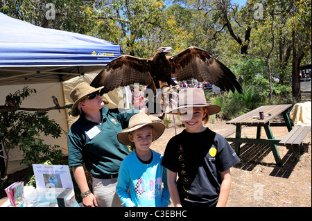 two children (9 years old, 12 years old) with a young Wedge-tailed Eagle (Aquila audax) spreading her wings. Western - Stock Photo