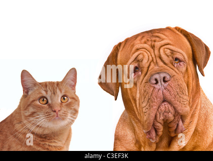 Dog and Cat Portraits Isolated - Stock Photo